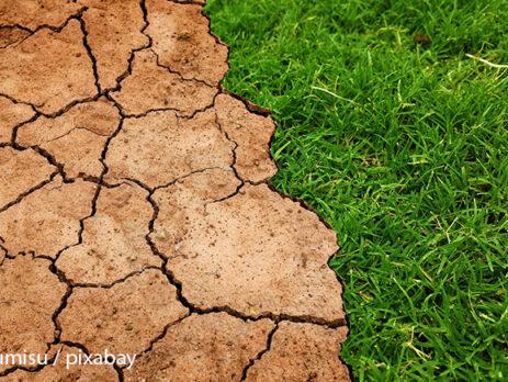 วิธีการแก้ปัญหาดินเป็นกรด acid soil